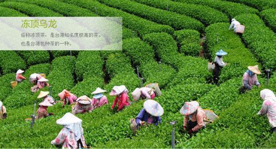 台湾冻顶乌龙茶好喝吗