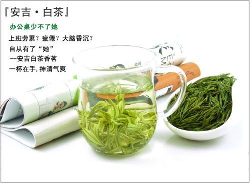安吉珍稀金山翠芽白茶价格