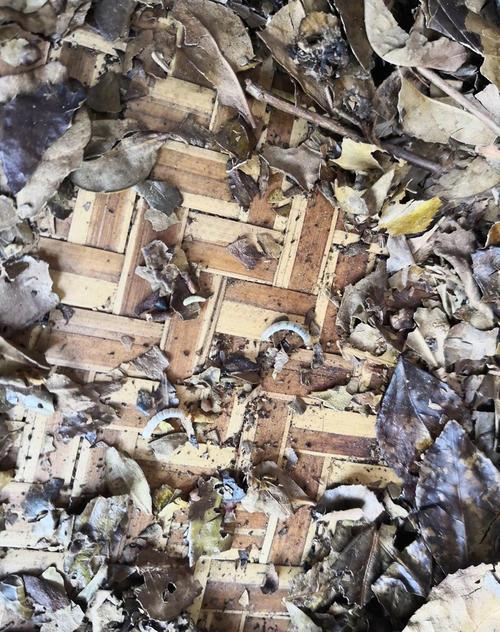 六堡老茶婆砖
